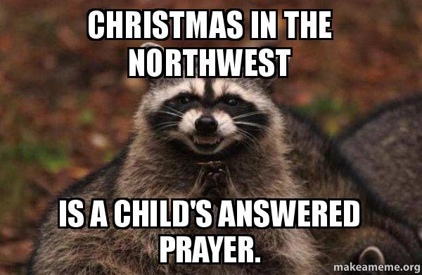 evil plotting raccoon meme download the iphone app evil plotting raccoon christmas in the northwest - Christmas In The Northwest