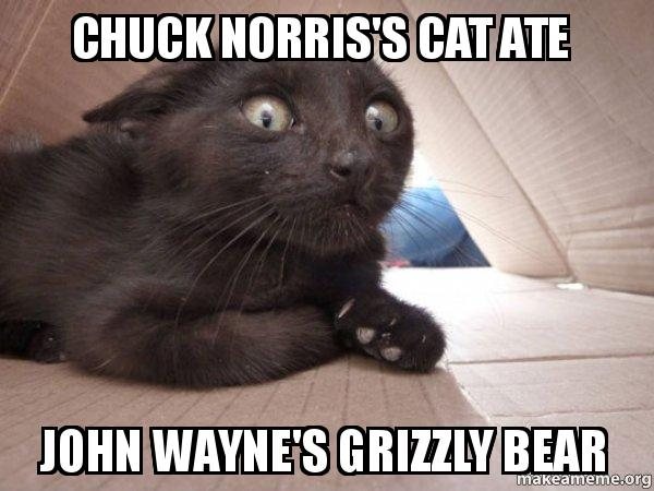 Chuck Norriss Cat Ate John Waynes Grizzly Bear Schitzo Cat