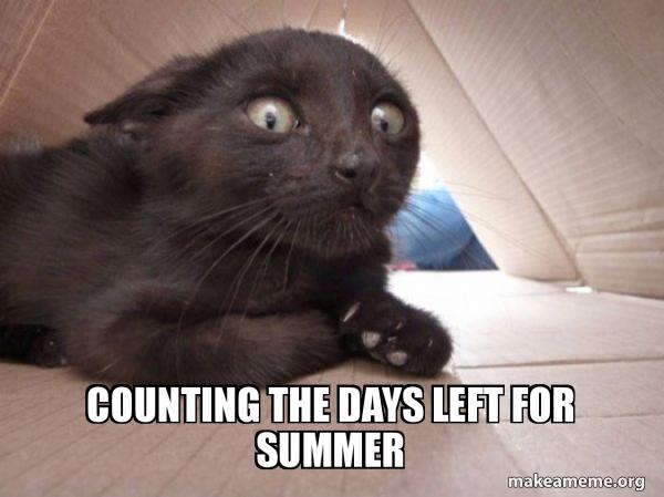 Schitzo Cat meme