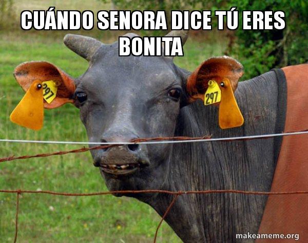 Cuándo Senora dice tú eres bonita - Hairless Cow | Make a Meme