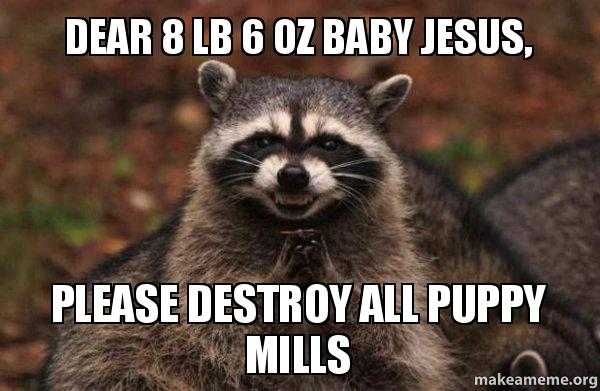 8lb 6oz baby jesus