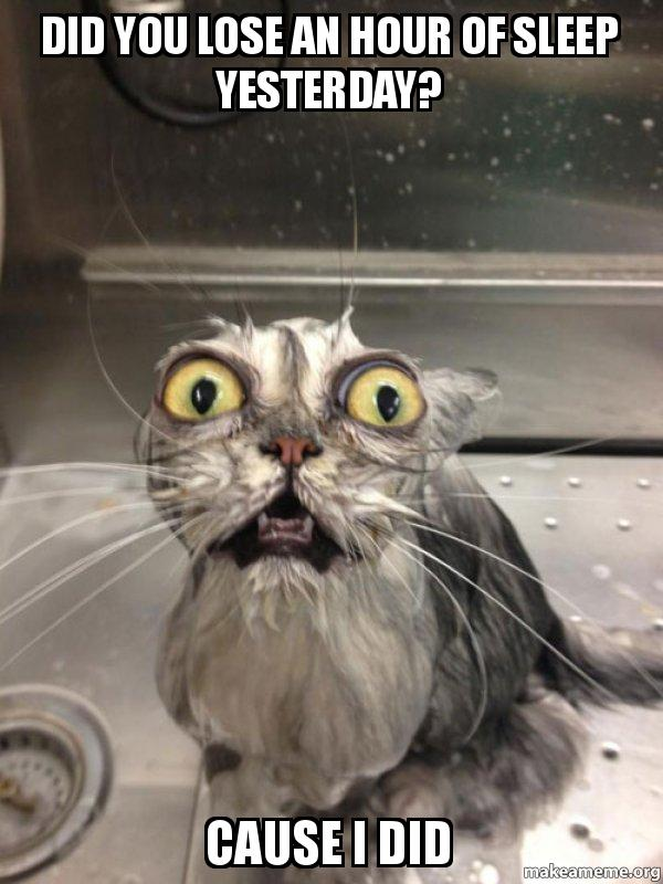 did you lose an hour of sleep yesterday? Cause I did - Cat bath