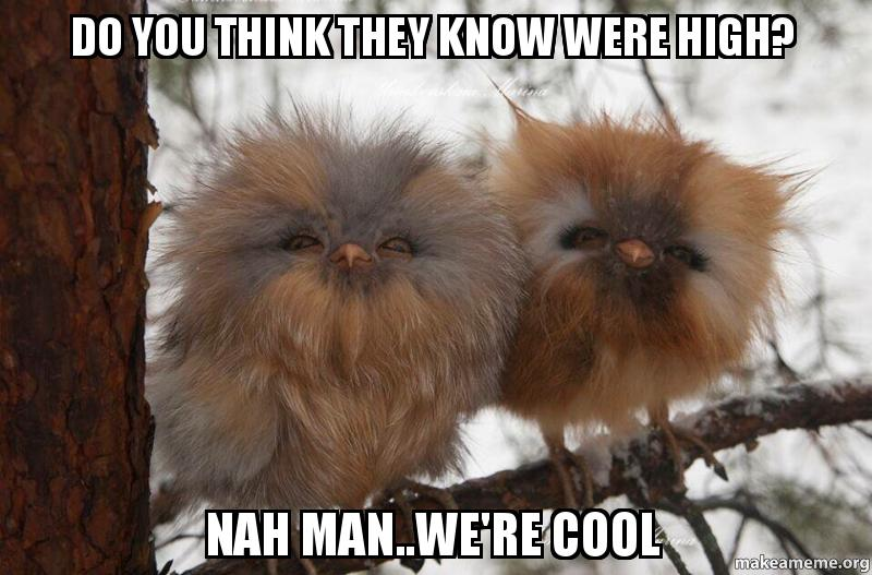 Do you think they know were high? Nah man..we're cool - | Make a Meme: http://makeameme.org/meme/do-you-think-neywfm