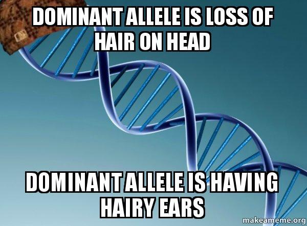 Hairy Ears Y Linked 8