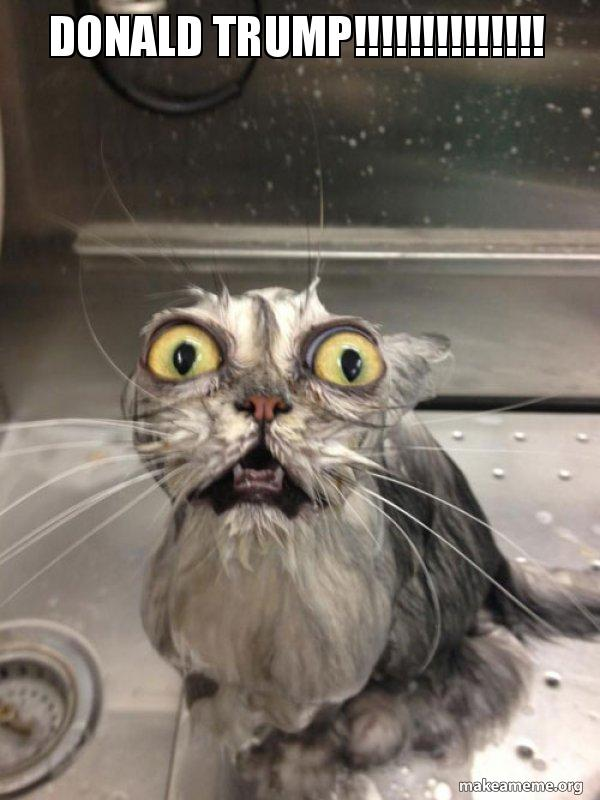 Donald Trump Cat Bath Make A Meme