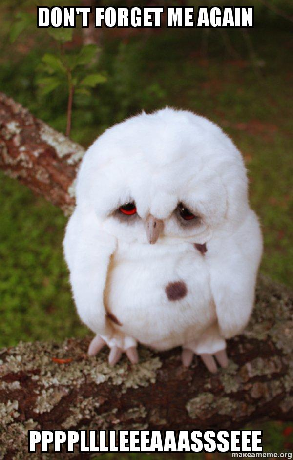 Dont Forget Me Again Pppplllleeeaaassseee Sad Owl Make A Meme