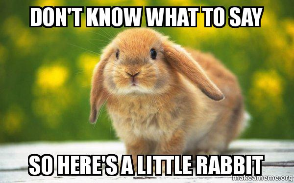 dont know what zn9ve4 don't know what to say so here's a little rabbit regretful