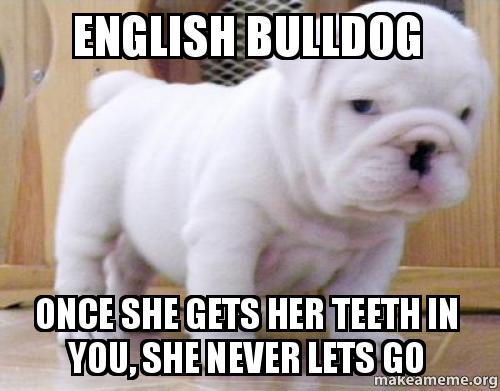 english-bulldog-once.jpg