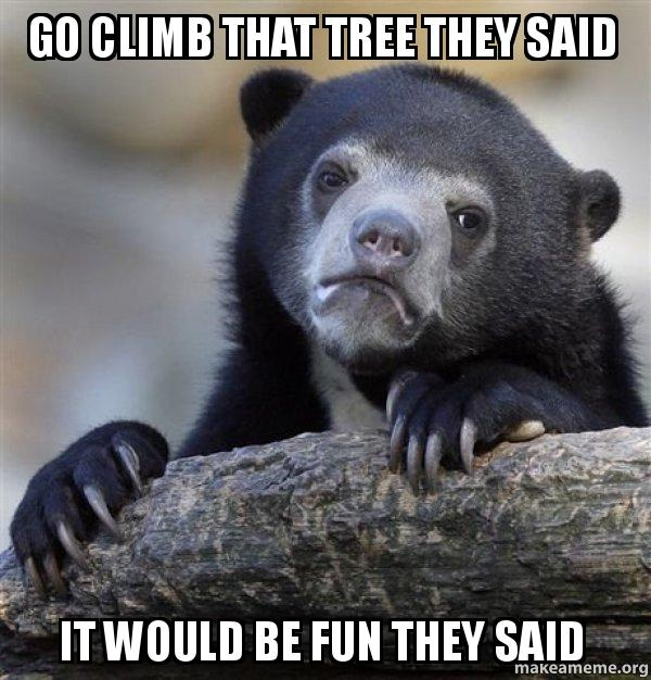 Go Climb That Tree They Said It Would Be Fun They Said Confession