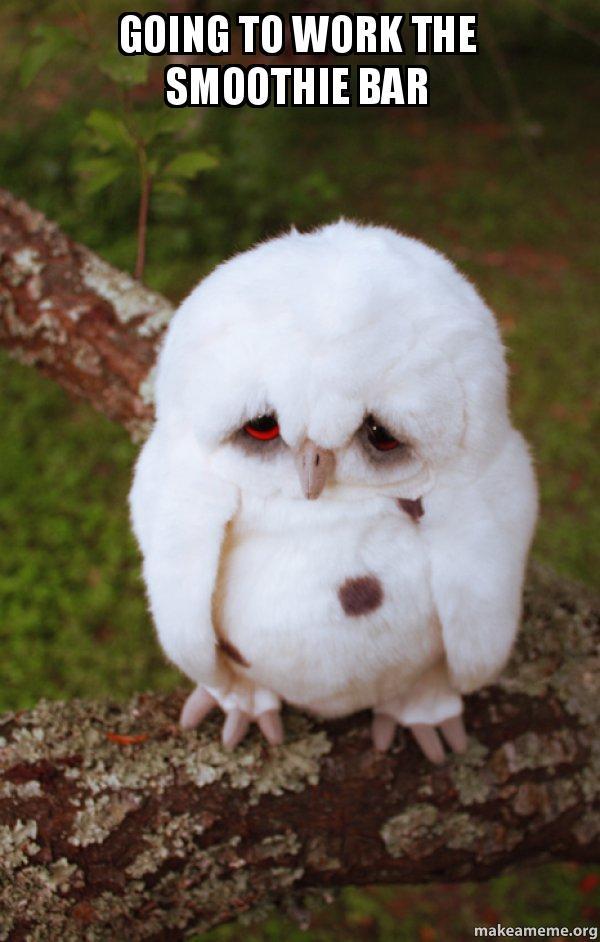 Going to work the smoothie bar - Sad Owl | Make a Meme