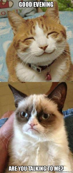 Good evening are you talking to me grumpy cat vs happy cat make grumpy cat vs happy cat meme altavistaventures Images