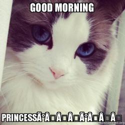 good morning princess good morning princessðŸ'\u2039ðŸ'\u2039 ridiculously photogenic cat make a