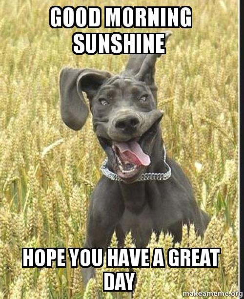 Good Morning Meme Dog : Good morning sunshine hope you have a great day make meme