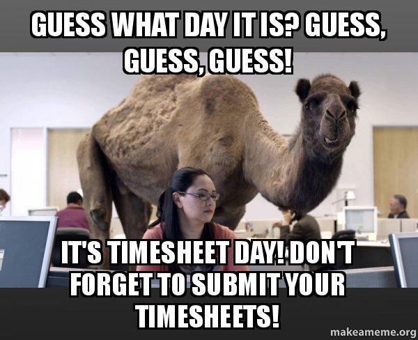 Hump Day Camel meme