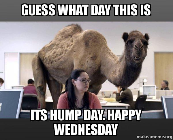 guess what day this is its hump day. happy wednesday ...