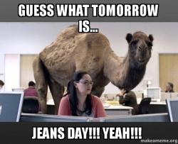 guess what tomorrow 2jnnxr guess what tomorrow is jeans day!!! yeah!!! hump day camel,Jeans Day Meme