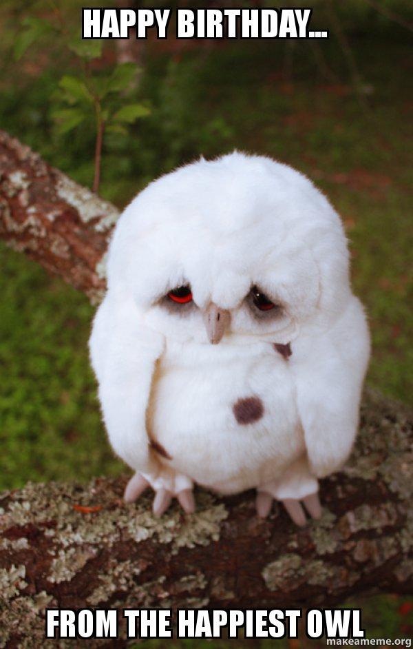 happy birthday from f5lbny happy birthday from the happiest owl sad owl make a meme