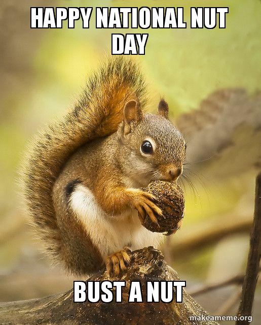Happy National Nut Day Bust a Nut | Make a Meme