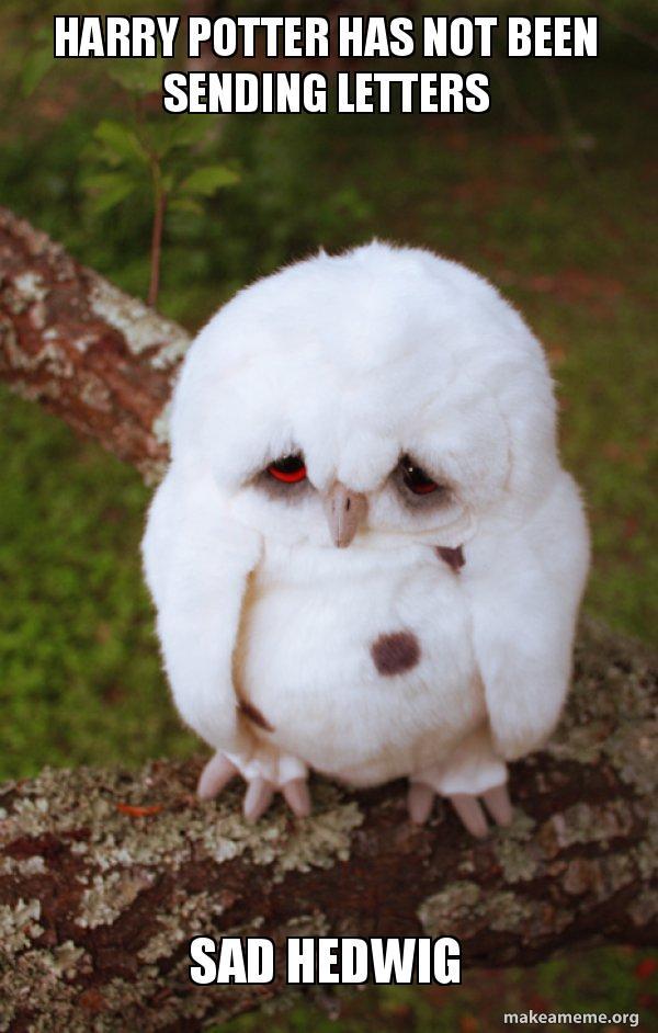harry potter has not been sending letters sad hedwig sad owl