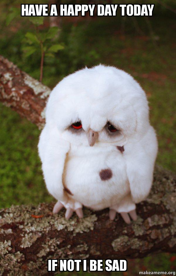 Have A Happy Day Today If Not I Be Sad Sad Owl Make A Meme
