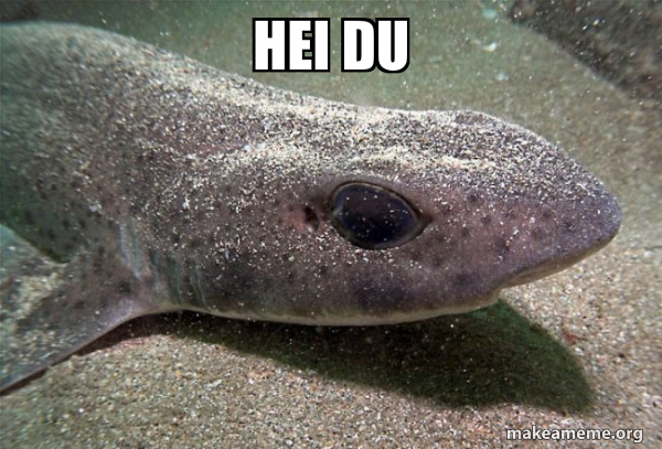 Dirty Joke Dogfish meme