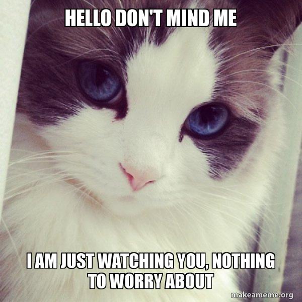 Ridiculously Photogenic Cat meme