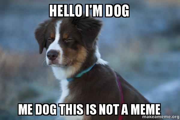 Hello Im Dog Me Dog This Is Not A Meme Im Dog Make A Meme