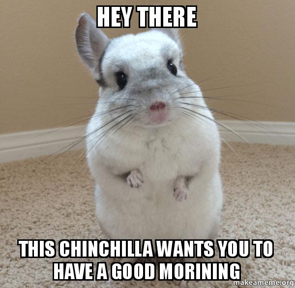 hey there this chinchilla wants you to have a good morining