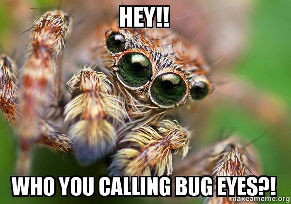 Hipster Spider meme