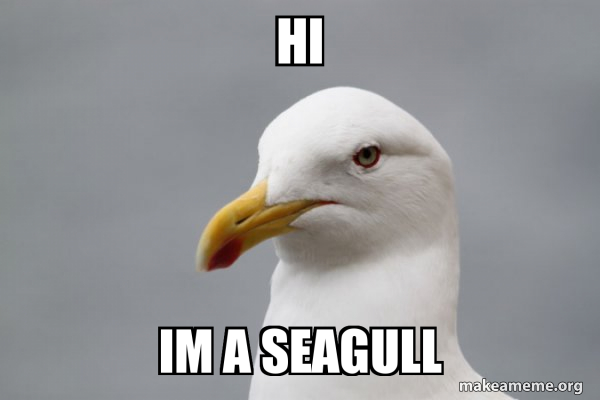Stuff That Didn't Happen Seagull meme