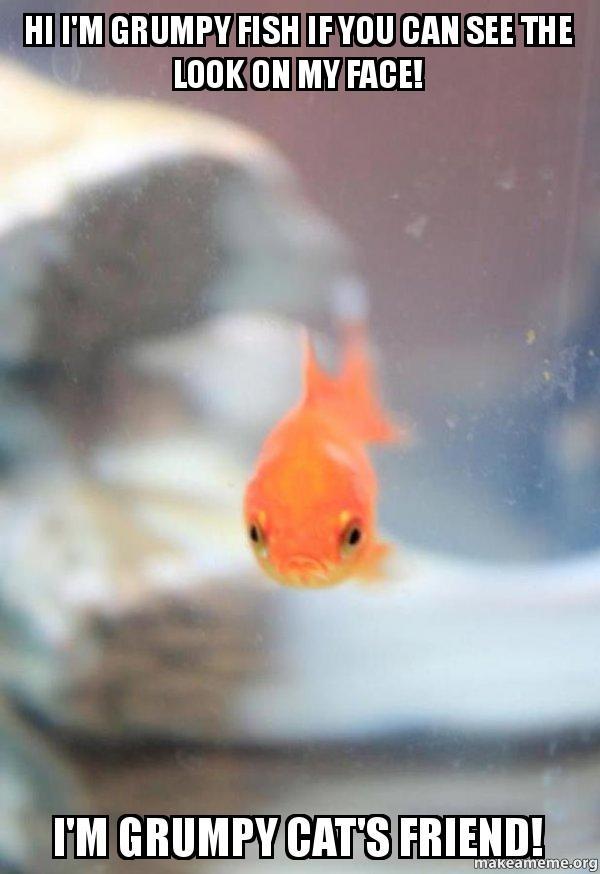 hi i m grumpy fish if you can see the look on my face i m grumpy cat