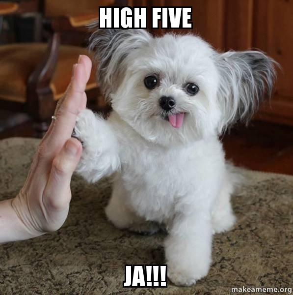Small Dog Tounge Out High Five