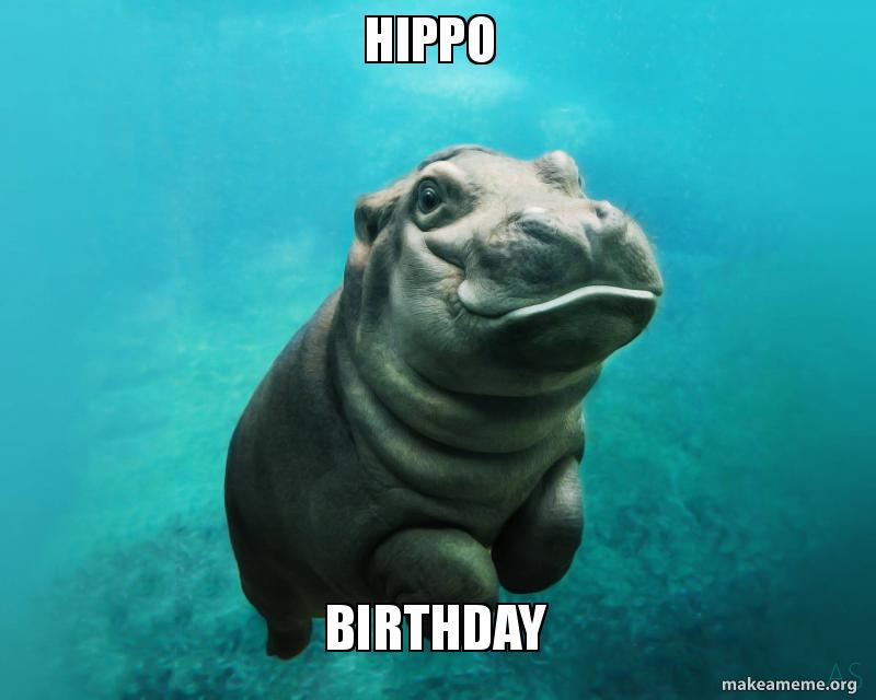 hippo birthday hippo birthday make a meme