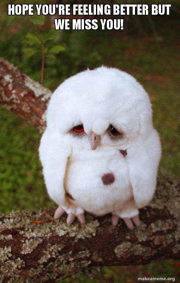 Hope Youre Feeling Better But We Miss You Sad Owl Make A Meme