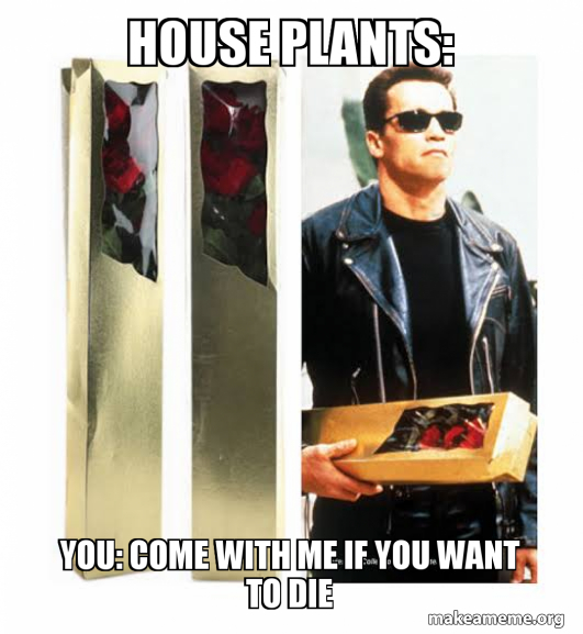 House Plants You Come With Me If You Want To Die Make A Meme