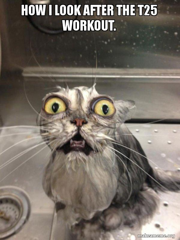 How I look after the T25 workout  - Cat bath | Make a Meme