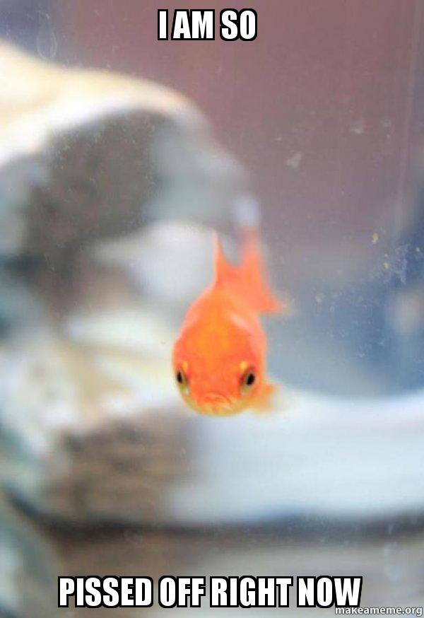 I am so pissed off right now grumpy fish make a meme for What kind of fish am i