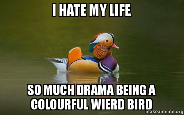 Reasons For No Other I Hate You Meme: I HATE MY LIFE SO MUCH DRAMA BEING A COLOURFUL WIERD BIRD