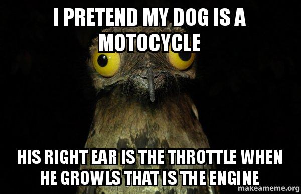 I pretend my dog is a motocycle his right ear is the ...