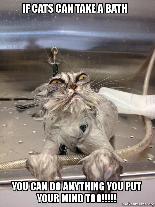 if cats can if cats can take a bath you can do anything you put your mind too