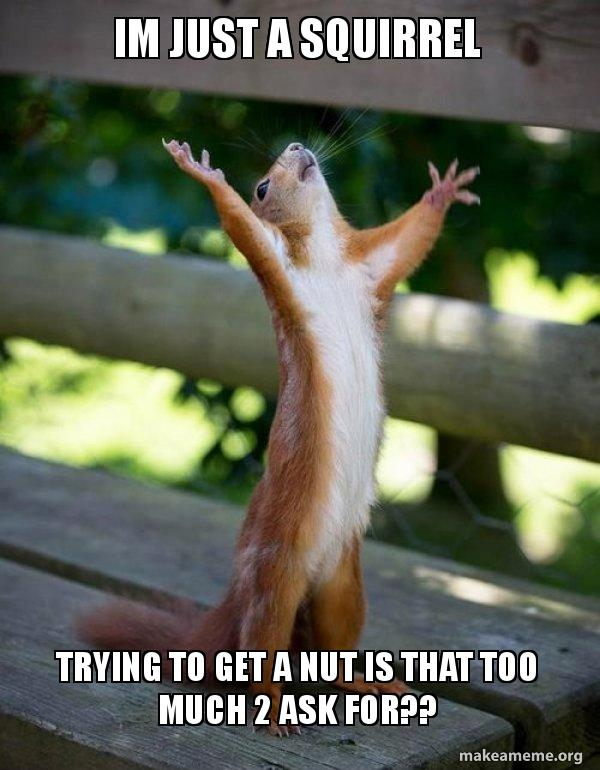 Squirrel trying to get a nut