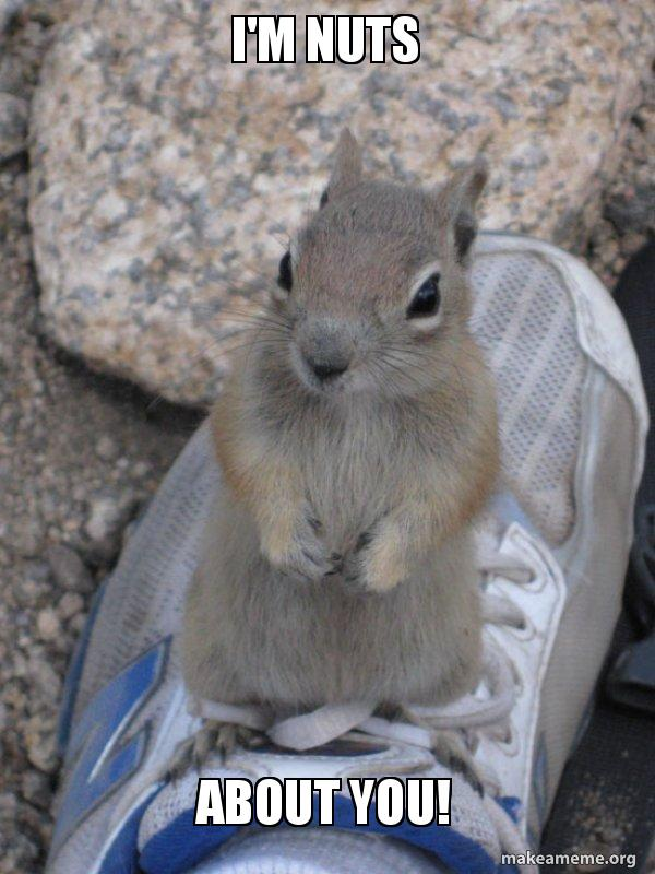 im nuts about ahwpc6 i'm nuts about you! standover squirrel make a meme,Squirrel Meme Nuts