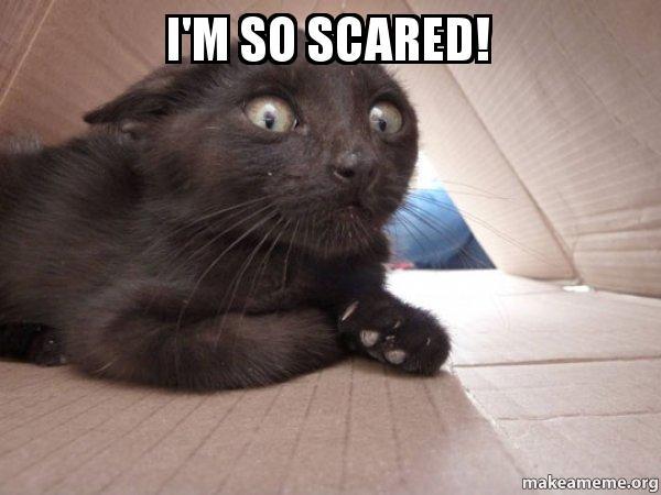 I'm so scared! - Schitzo Cat   Make a Meme