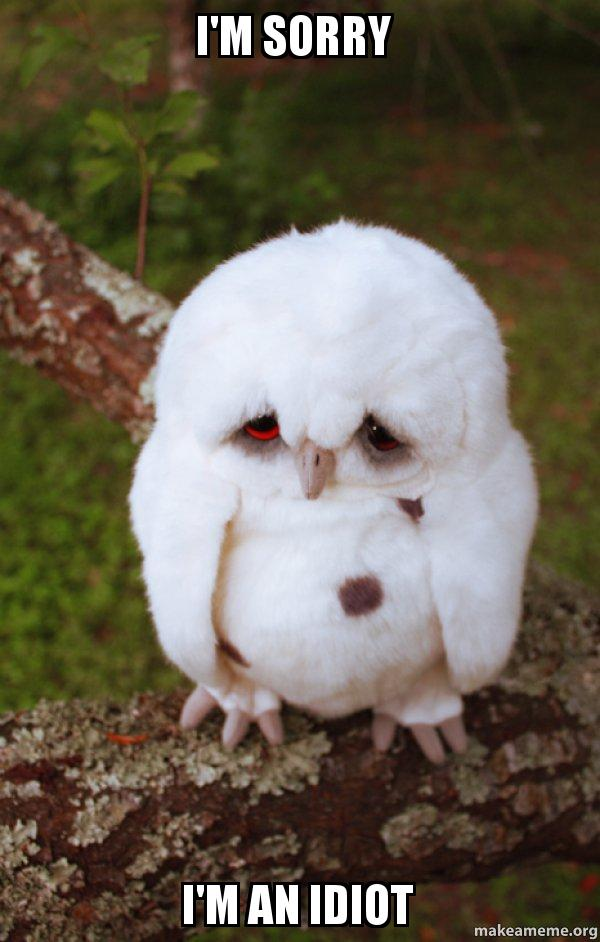im sorry k9vtyy i'm sorry i'm an idiot sad owl make a meme,Im Sorry Meme