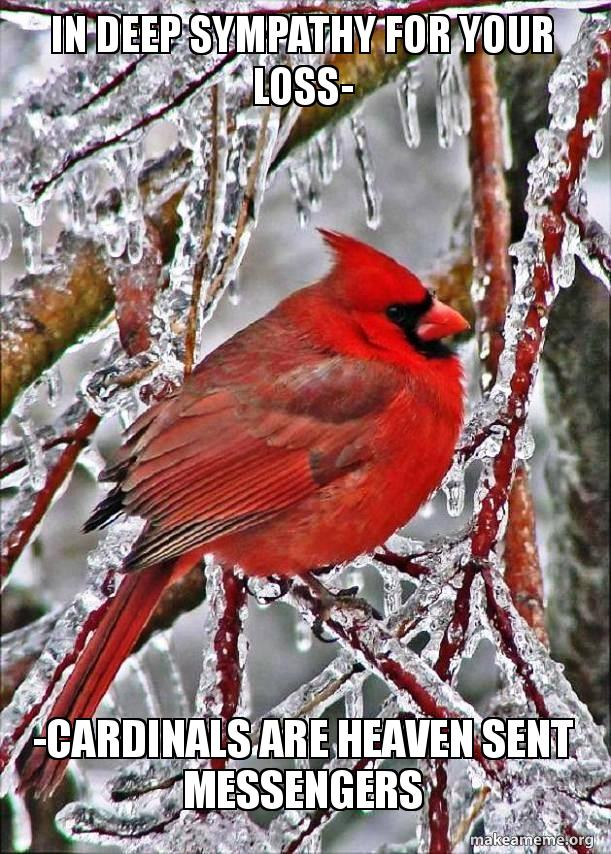 IN DEEP SYMPATHY FOR YOUR LOSS- -CARDINALS ARE HEAVEN SENT ...