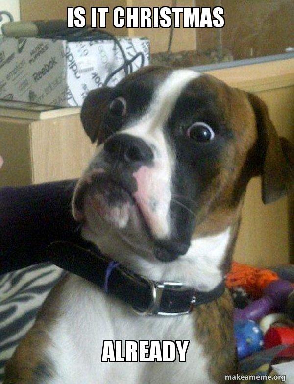 Dog Christmas Meme.Is It Christmas Already Skeptical Dog Make A Meme