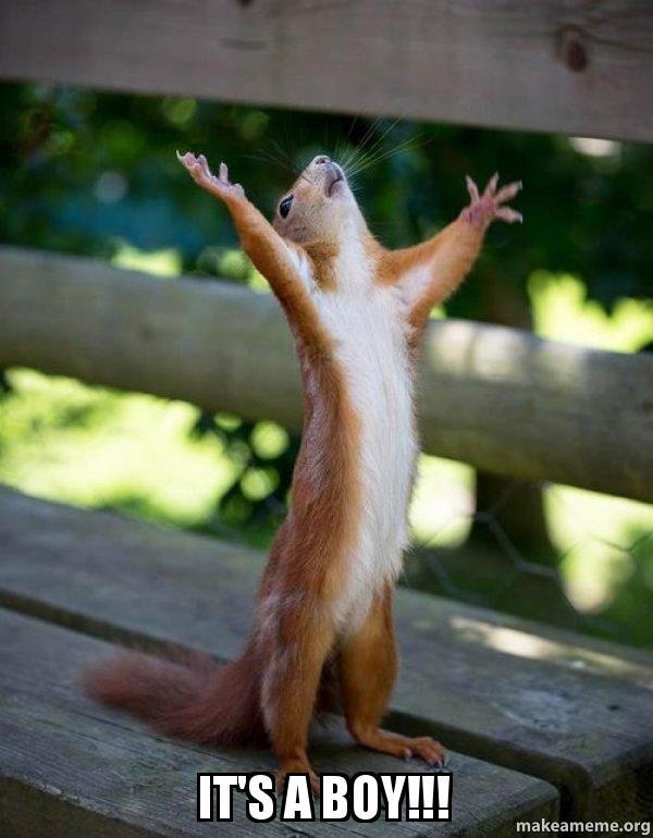 its a boy yzs3ih it's a boy!!! happy squirrel make a meme