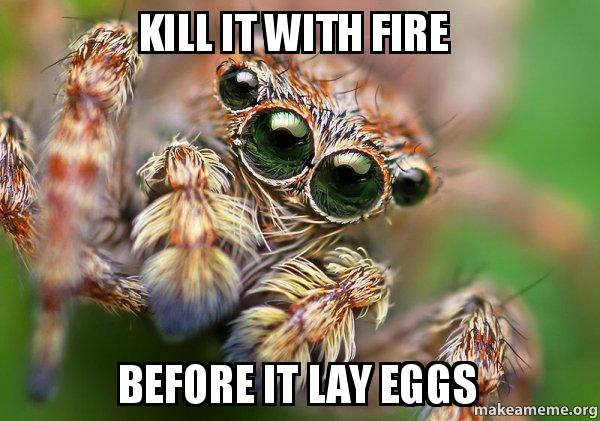 Kill It With Fire Before It Lay Eggs Hipster Spider Make A Meme