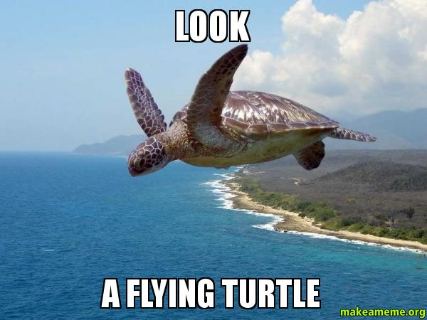 Flying turtle meme - photo#1