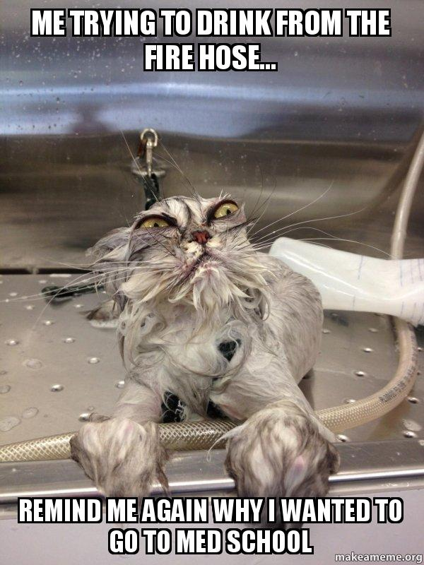 Cat Bath Returns meme & Me trying to drink from the fire hose... Remind me again why I ...